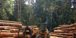 Desmatamento da Amazônia em abril de 2021 é o maior da série histórica, mostra Inpe